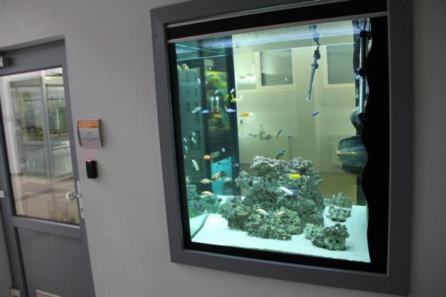 Akvárium v demonstrační stáji