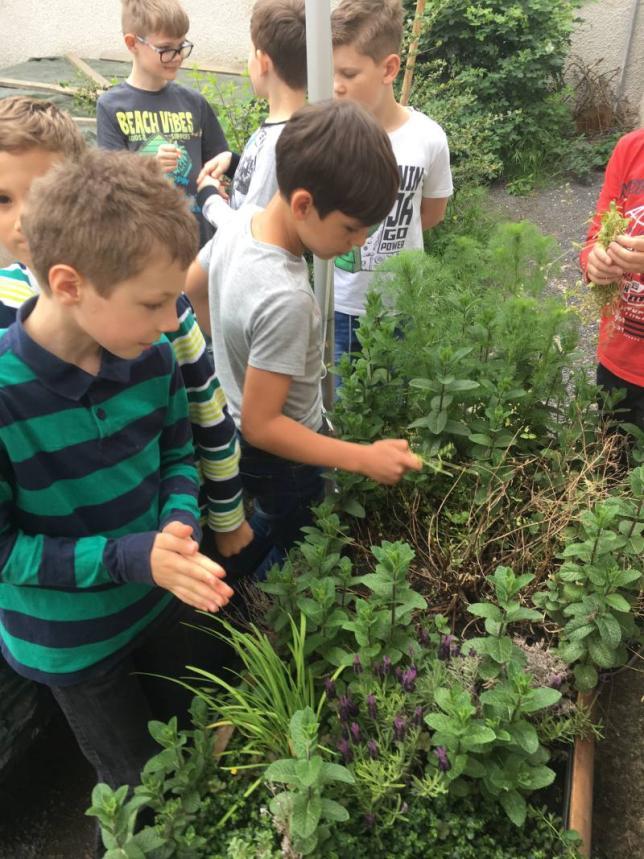 Rostliny na školním dvoře