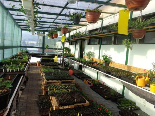 skleník - zahradníci