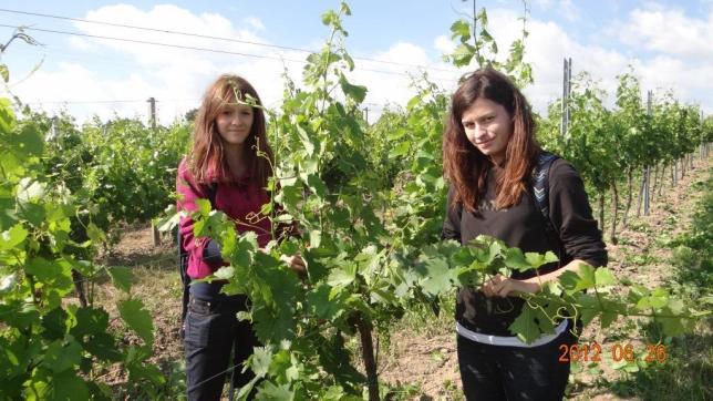Odborná praxe ve školní vinici