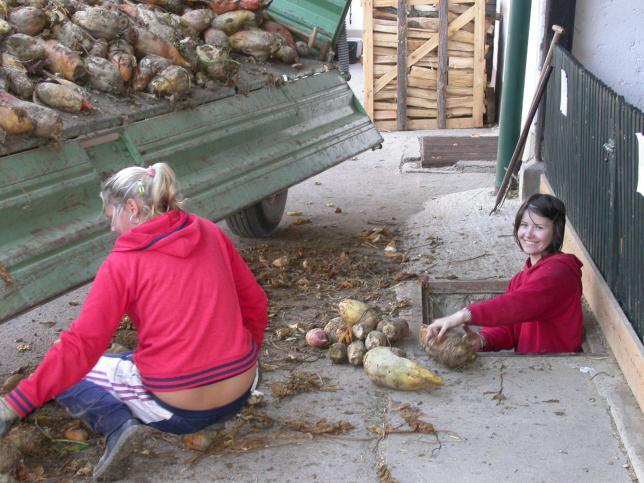 Agroturisti při práci na farmě